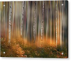 Acrylic Print featuring the photograph 4497 by Peter Holme III