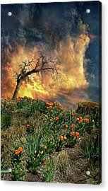 Acrylic Print featuring the photograph 4509 by Peter Holme III