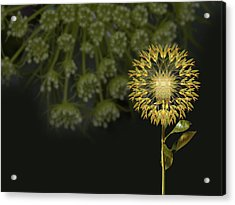 Acrylic Print featuring the photograph 4512 by Peter Holme III