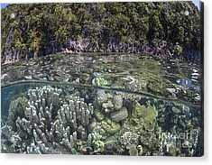 A Healthy Coral Reef Grows Acrylic Print by Ethan Daniels