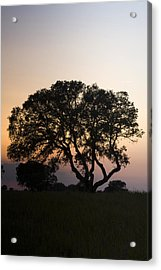 Alentejo Acrylic Print by Andre Goncalves