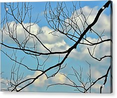 Bare Branches Acrylic Print by JAMART Photography