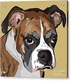 Boxer Dog Portrait Acrylic Print