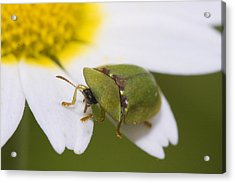 Bug Acrylic Print by Andre Goncalves