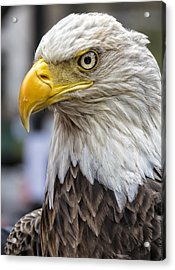 Challenger The Bald Eagle Acrylic Print