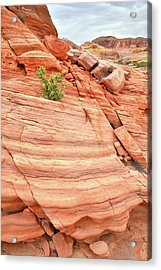 Acrylic Print featuring the photograph Colorful Wash In Valley Of Fire by Ray Mathis