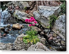 Acrylic Print featuring the photograph Dallas Arboretum by Diana Mary Sharpton