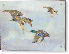 5 Ducks Acrylic Print