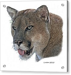 Florida Panther Acrylic Print by Larry Linton