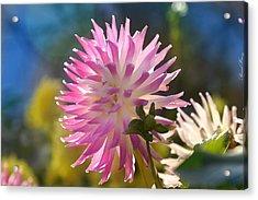 Acrylic Print featuring the photograph Flower Edition by Bernd Hau