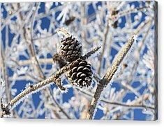Hoar Frost Acrylic Print by Dacia Doroff