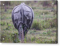 Indian Rhinoceros, India Acrylic Print