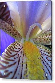 Iris Acrylic Print by Michele Caporaso