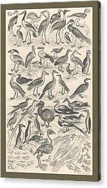 Ornithology Acrylic Print by Rob Dreyer