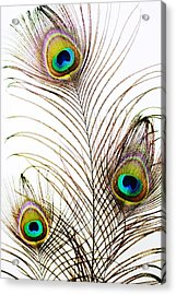 Peacock Feathers Acrylic Print by Mary Van de Ven - Printscapes