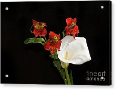 Red With White Acrylic Print