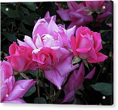 Roses Acrylic Print by Michele Caporaso