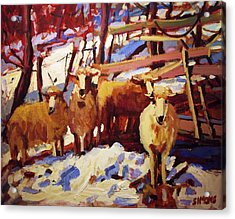 5 Sheep Acrylic Print by Brian Simons