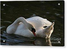 Swan Lake Story Acrylic Print by Valia Bradshaw
