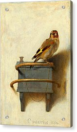The Goldfinch Acrylic Print