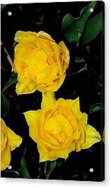 Yellow Flowers Acrylic Print by Patrick  Short