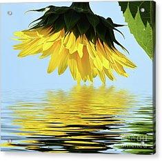 Nice Sunflower Acrylic Print by Elvira Ladocki