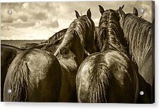 #5815 - Mortana Morgan Mares Acrylic Print