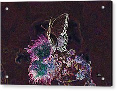 5846 3 Acrylic Print by Jim Simms