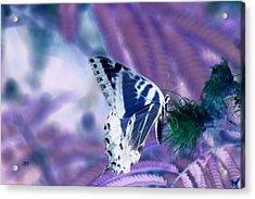 5859 2 Acrylic Print by Jim Simms