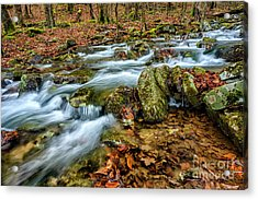 Acrylic Print featuring the photograph Aldrich Branch Monongahela National Forest by Thomas R Fletcher