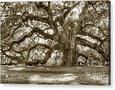Angel Oak Live Oak Tree Acrylic Print by Dustin K Ryan