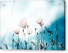 Corn Poppy Flowers Acrylic Print