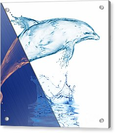 Dolphin Collection Acrylic Print by Marvin Blaine