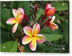 Flowers Acrylic Print by Anthony Jones