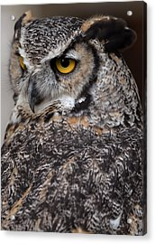 Acrylic Print featuring the photograph Great Horned Owl by JT Lewis