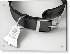 Leather Collar With Tag Acrylic Print by Allan Swart