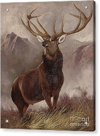 Monarch Of The Glen Acrylic Print