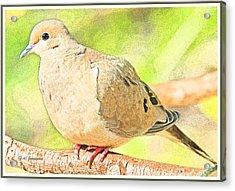Mourning Dove Animal Portrait Acrylic Print by A Gurmankin