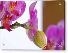 Acrylic Print featuring the photograph Pink Orchid by Dariusz Gudowicz