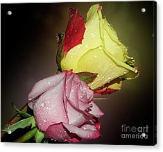 Acrylic Print featuring the photograph Roses by Elvira Ladocki