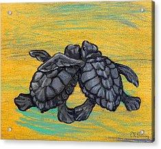 Sea Turtles Acrylic Print by MGilroy