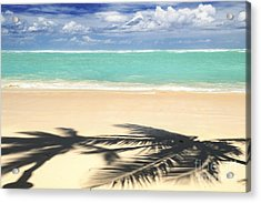 Tropical Beach Acrylic Print by Elena Elisseeva