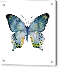 68 Laglaizei Butterfly Acrylic Print by Amy Kirkpatrick