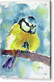 Bird Acrylic Print by Kovacs Anna Brigitta