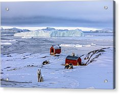 Huskies In Ilulissat, Greenland Acrylic Print by Joana Kruse