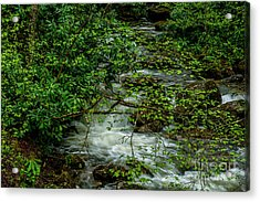 Acrylic Print featuring the photograph Kens Creek Cranberry Wilderness by Thomas R Fletcher
