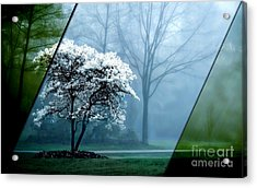 Nature Collection Acrylic Print
