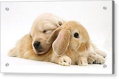 Rabbit And Puppy Acrylic Print