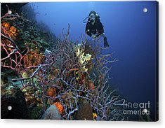 Scuba Diver Swims Underwater Amongst Acrylic Print by Terry Moore