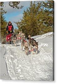 Sled Dog Races Acrylic Print